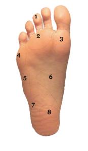 Plantar View of Foot